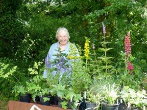 Plant Stalls (2)